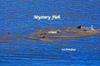 Mysteries & Nessy